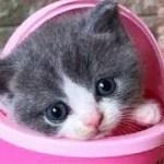 「猫かわいい」 すごくかわいい子猫 – 最も面白い猫の映画 #303