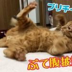 遊んでる姿が子猫みたいにかわいいきんたさん!