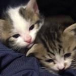 お父さんの膝の中で寛ぐ子猫がかわいい