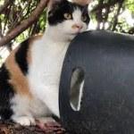 三毛ちゃん落ち着いてご飯食べていいから。可愛い猫動画