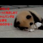 【チビ浜通信②】布を抱いて眠る可愛い赤ちゃん ♡天使の寝顔♡