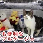猫をケージ入れてみたら超可愛い♥☆お出かけや災害時に便利なポータブルケージを紹介☆【リキちゃんねる 猫動画】Cat video キジトラ猫との暮らし
