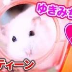 ゆきみちゃんの朝のルーティーン!超可愛い💕【ハムスター】