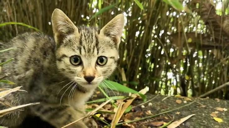 驚いた顔をする子猫の目がおもしろい