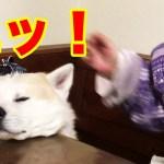 エッ!何すんねん・秋田犬・惣右介・驚き