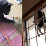 猫ちゃんの自由気ままで可愛い行動がじわじわ面白くて癒される♡~Cute action is interesting and healed with the freedom of the cat.