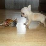 「絶対に笑う」あり得ないことをする犬★おもしろい犬のハプニング, 失敗画像集 #30