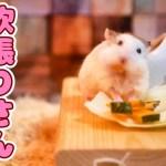 【ハムスター】可愛いエルフちゃんは欲張りさん Hey Hamster!, Do't Be Greedy!