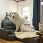 #1「甘えん坊の犬」抱っこして♡ 飼い主に甘える犬が超かわいい