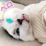 舌を出して寝ちゃう猫!名前を呼ぶと可愛いお返事にメロメロ【病気に負けない!福ちゃん闘病日記 4】