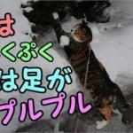 猫と雪と雀の面白い出来事とは?!-かわいい猫なのに犬として育てられた猫64‐The cat which shakes a foot shudderingly