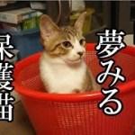 かわいい子猫が突然お家にやってきた-その時、先住猫達は・・・?!12週間目6-kitten came to our house 85