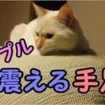 猫のプルプルする手足が笑えます! -かわいい子猫と面白い猫ベスト集21