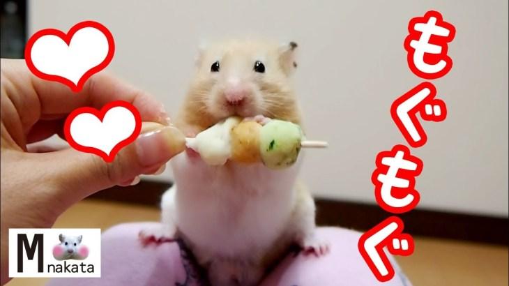 【ハムスター】最強に可愛いおやつタイム動画18連発!おもしろ可愛い癒しThe hottest cute snack time movie of the hamster!