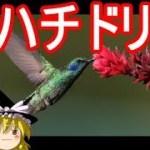 【おもしろゆっくり】意外に可愛い魅惑の「鳥」特集!その①