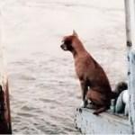 川でボートから落ち、飼い主と生き別れた犬…迎えに来ると信じ、その犬は4ヶ月待ち続けるが…【世界が感動!涙と感動エピソード】