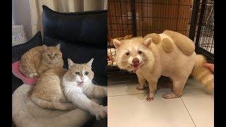 最高にかわいい、面白い動物たちに癒される♡~It is healed by the most cute, funny animals ♡