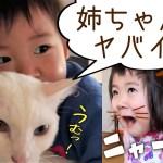 2歳児&猫さんもびっくり!猫になったお姉ちゃん