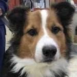 【感動】飼い主に捨てられ笑顔を失った犬が再び笑顔を取り戻すまで・・・