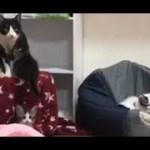 最後は母猫に集合する子猫の日常がかわいい