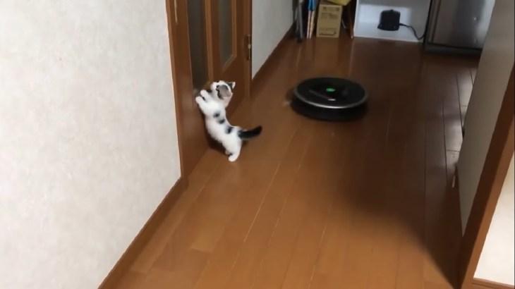 子猫 豆大福がルンバに乗る瞬間もかわいい