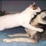 「面白い動物」あり得ないことをする犬, 猫・おもしろ犬, 猫のハプニング, 失敗集 #275