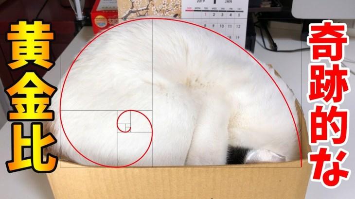 窮屈な段ボール箱に無理やり入る猫が可愛いすぎる