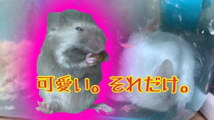 【捕食一切無し】かわいいマウスを紹介するよ!