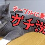 【テーブル説教】猫かわいいから怒れないよう…