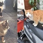 街中で待ち伏せしている可愛い猫ちゃんにほっこりと和む♡~I am relaxing with a cute cat ambushing in the city.