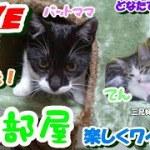 ネコ部屋Live楽しくワイワイ 子猫が可愛い