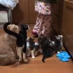 ゾロゾロとご飯を求めて集ってくる子猫がかわいい