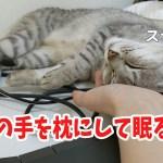ママの手を枕にして眠る猫が可愛い…!