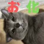 【カワイイ】お化けでニャンニャンする猫(ロシアンブルー)
