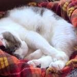 【庭に可愛いお客さんが来ていても幸せ寝をしているのら】A cute guest and a happy sleeping cat