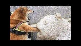 「面白い動物」あり得ないことをする犬, 猫・おもしろ犬, 猫のハプニング, 失敗集 #312