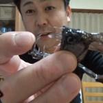 【食レポ】キバがすごい深海魚を食べてみました!!