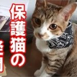 その後の、かわいい子猫が突然お家にやってきた-その時、先住猫達は・・・7-保護猫の疑問