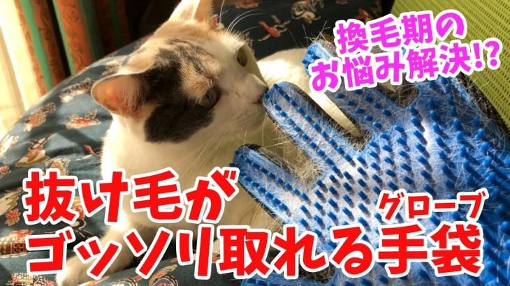 【猫の換毛期抜け毛対策】グルーミンググローブの効果が凄い!