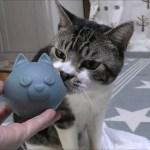 可愛い八つ当たり☆ボールへのイライラをビニール袋にぶつける猫リキちゃん☆後ろ足ケリケリ連発【リキちゃんねる 猫動画】Cat video キジトラ猫との暮らし