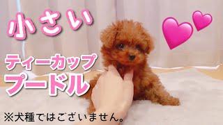 世界一かわいい犬〜親バカ、愛犬が可愛すぎる。