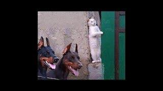 2019「絶対笑う」最高におもしろ犬,猫,動物のハプニング, 失敗画像集 #46