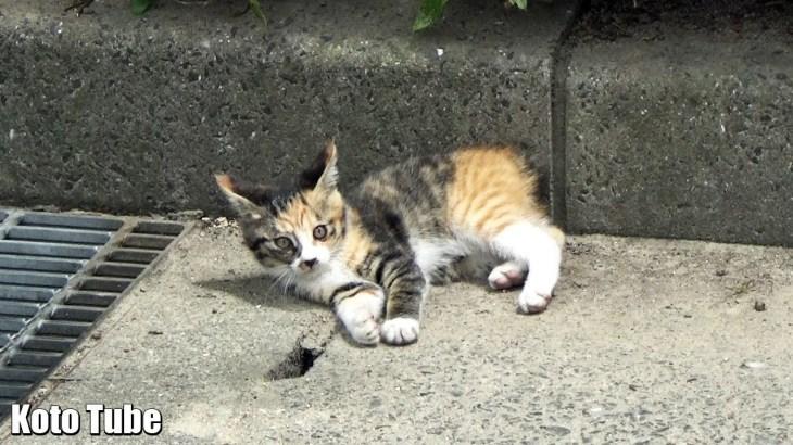 子猫!発見!公園猫について行くと、かわいい2匹の子猫が待っていた!