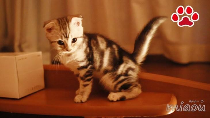 かわいいぬいぐるみかと思ったら仔猫アリスだった