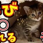 かわいい子猫 キャットタワーで遊んでいると突然○○されそうになる子猫がかわいい A mother cat is trying to take a kitten away