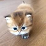 トテトテと寄ってくる可愛い子猫💕🐱 何か用があるのかと思いきや… 【PECO TV】