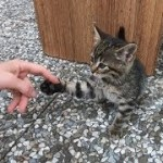 Tabby kitten wants to play with me after eating food