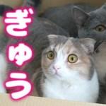 【神ぎゅう】箱に一緒に入る猫たちがカワイイすぎる!