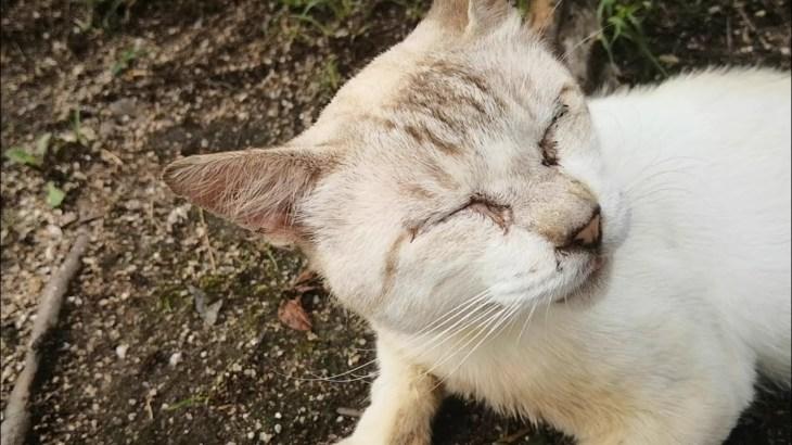 ナデナデすると凄い喜びを見せる野良猫