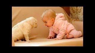 2019 犬や猫と遊ぶかわいい赤ちゃん – おかしい赤ちゃんコンピレーション#416